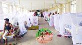হাসপাতালে ভর্তি আরও ১৫০ ডেঙ্গুরোগী